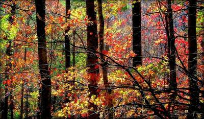 Color The Forest Print by Karen Wiles