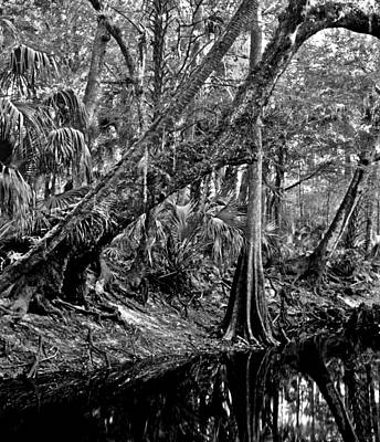 Forest On The Econ River Print by Chris  Kusik