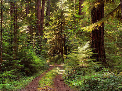 Forest Path 4 Print by Leland D Howard