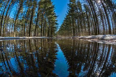 Forest Reflections Print by Randy Scherkenbach