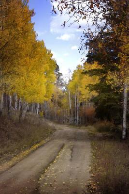 Forest Road In Autumn Print by Ellen Heaverlo