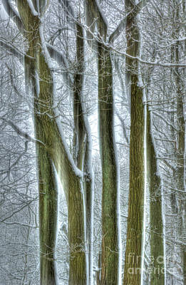 Forest Sentinels Print by David Birchall