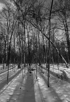 Forest Floor Photograph - Forest Shadows In Winter by Dan Sproul