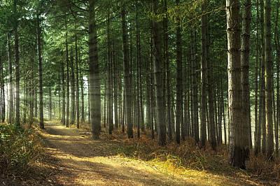 Forest Sun Rays Print by Svetlana Sewell