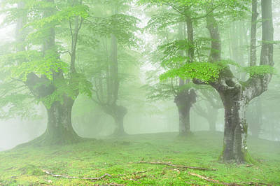 Fantasy Bark Photograph - Forest With Fog And Beautiful Light by Mikel Martinez de Osaba