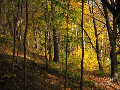 Forestlight Print by Lutz Baar
