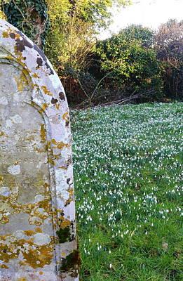 Sutton Photograph - Forgotten Spring by Rumyana Whitcher
