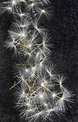 Weed Line Photograph - Forgotten Wishes by Marianna Mills