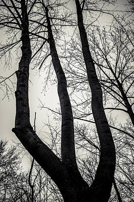 Forked Print by Off The Beaten Path Photography - Andrew Alexander