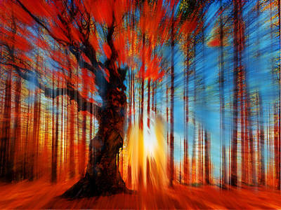 Forrest And Light Print by Tony Rubino