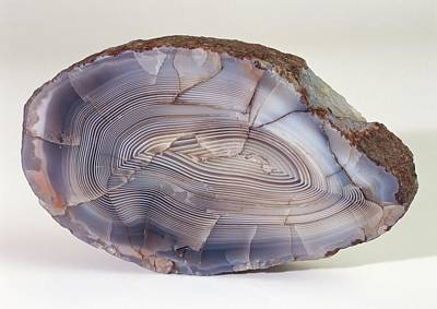 Agate Photograph - Fortification Agate by Dorling Kindersley/uig