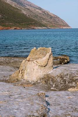 Silica Photograph - Fossil Tree Stump by David Parker