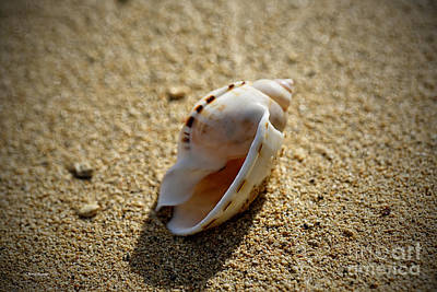 Found Shells 2 Print by Cheryl Young