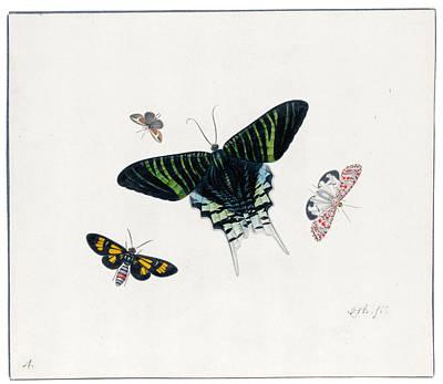 Herman Henstenburgh Painting - Four Butterflies by Herman Henstenburgh
