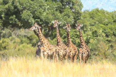 Mammal Digital Art - Four Masai Giraffes Masai Mara Kenya by Liz Leyden