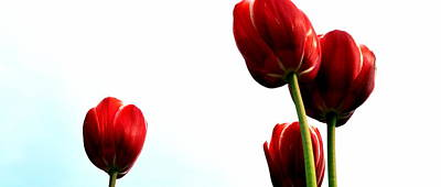 Outdoor Still Life Photograph - Four Red Tulips by Michelle Calkins