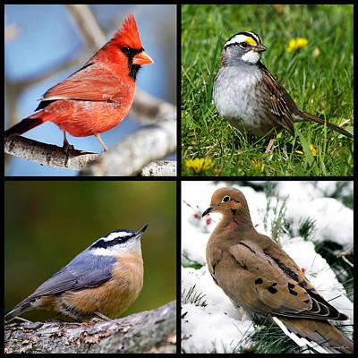 Cardinal Digital Art - Four Seasons Birds Square by Christina Rollo