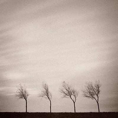 Zeeland Photograph - Four Trees by Dave Bowman