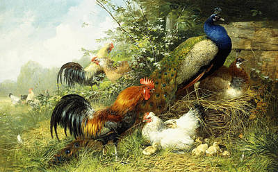 Fowl And Peacocks Print by Arthur Fitzwilliam Tait