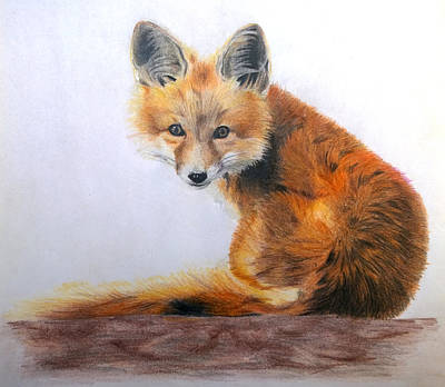Red Foxes Drawing - Fox by Obibi Art