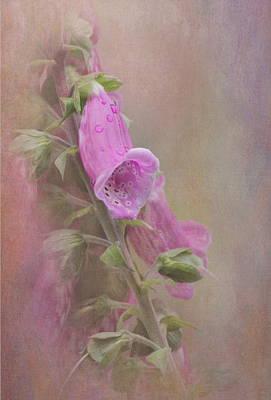 Foxglove Print by Angie Vogel