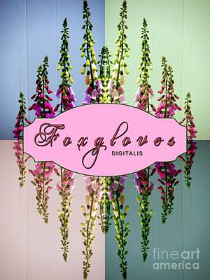 Foxgloves Times 4 Print by Margaret Newcomb