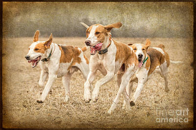 Foxhounds Print by Heather Swan