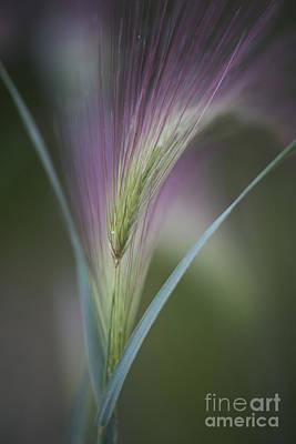 Vertical Format Photograph - Foxtail Barley by Priska Wettstein
