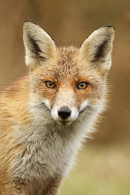 Fall Photograph - Foxy Face by Roeselien Raimond