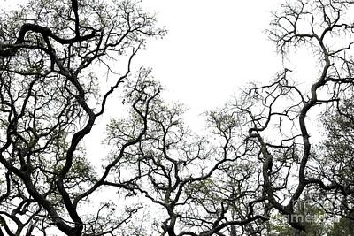 Fractal Branches Print by Theresa Willingham