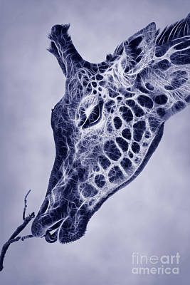 Fauna Digital Art - Fractal Giraffe Duotone by John Edwards