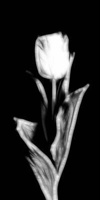 Fractal Tulip Print by Sebastian Musial