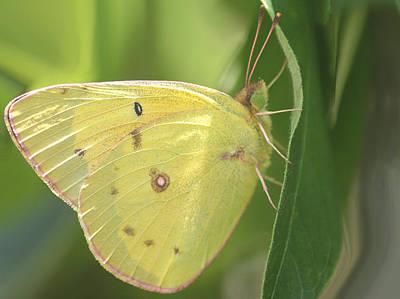 Butterflies Photograph - Frail Beauty by  The Art Of Marilyn Ridoutt-Greene