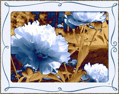 Framed Peonies Print by Will Borden