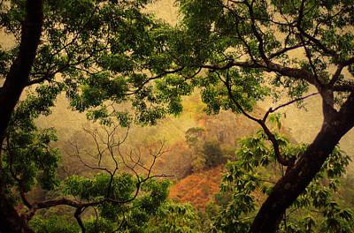 Framing Tree Branches Print by Jenny Rainbow
