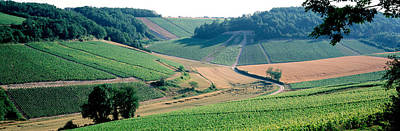 France, Chablis, Vineyards Print by Panoramic Images