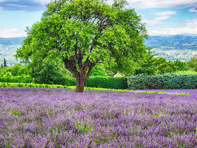 Provence Photograph - France, Provence, Lone Tree In Lavender by Terry Eggers