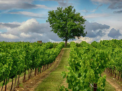 France, Provence, Lone Tree In Vineyard Print by Terry Eggers