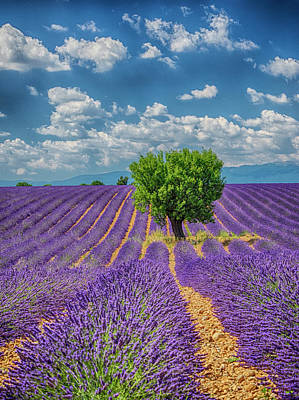 Provence Photograph - France, Provence, Valensole, Lone Tree by Terry Eggers