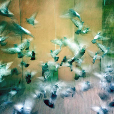 Animals Photograph - Frantic Wing Beats - Many Scared Pigeons by Matthias Hauser