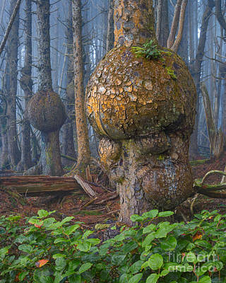 Burl Photograph - Freaky Forest Dweller by Don Hall
