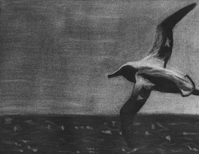 Albatross Drawing - Free As A Bird by Tina Boyer
