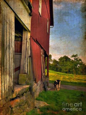 Dairy Farming Photograph - Free Range by Lois Bryan