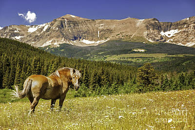 Free Roaming Stallion On A Montana Ranch Print by Thomas Schoeller