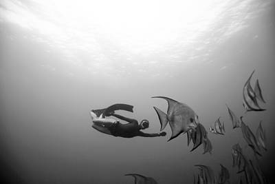 Freediver And Batfish Print by One ocean One breath