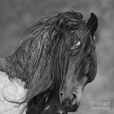 Stallion Photograph - Freedom Close Up by Carol Walker