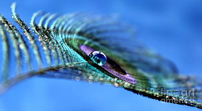 Peacock Photograph - Freedom Feather by Krissy Katsimbras