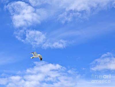 Seagull Photograph - Freedom by Liz Leyden