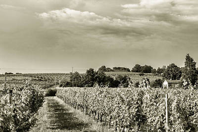 Grapevine Photograph - French Vineyard Toned by Georgia Fowler