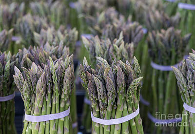 Asparagus Photograph - Fresh Asparagus by Mike  Dawson